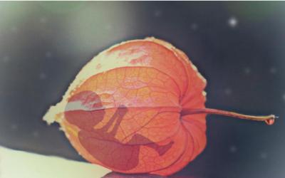 Эмоциональная травма после аборта: симптомы, причины, избавление